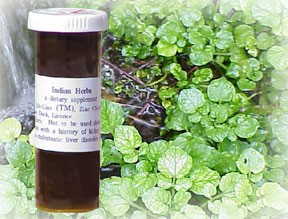 Hierba India - Indian Herb