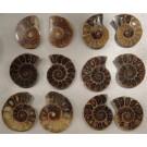 Fósiles Ionizados Ener-Chi
